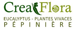 Crea Flora  pépinière Eucalyptus Plantes vivaces